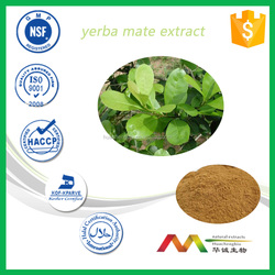 ISO&GMP manufacturer supply Yerba Mate extract powder