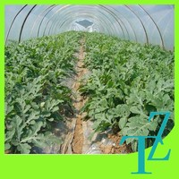 plastic greenhouse film for fruits/flowers/corps