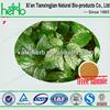 Natural gynostemma pentaphyllum extract powder 80% UV/Gynostemma Extract