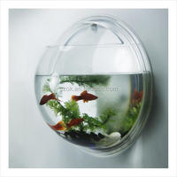 Mini wall mounted exquisite acrylic fish tank display wholesale