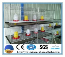 battery brooders for chicks/layer chicken battery cages