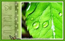 export product gum food additive menthol