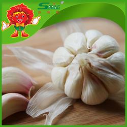 Chinese fresh garlic price