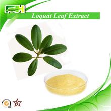 100% Natural Eriobotrya Japonica Extract, Loquat Leaf Extract With Ursolic Acid 98%