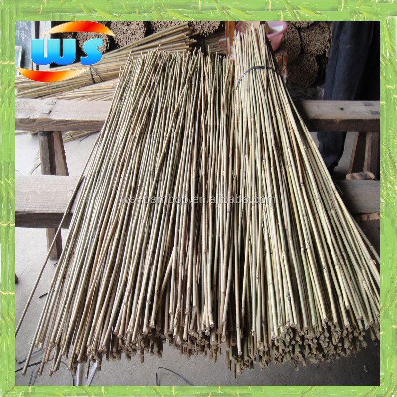 Green bamboo cane used for variety show performance 4ft 10 for Uses for bamboo canes