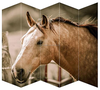 /product-gs/5-pieces-horse-canvas-room-divider-screens-for-living-room-decoration-60211688851.html