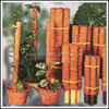 Cane pole plant for garden and indoor gardens