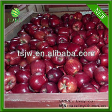 NEW red delicious apple price