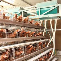 Best quality automatic broiler chicken cage/day old broiler chicks for sale