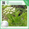 Best selling Health product Snowparsley extract 98% Osthole with nice price!