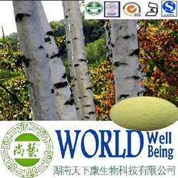 Hot sales plant extract Betula Alba extract/Betulin 80%-98%/Detoxic Free sample