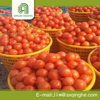 farms varieties red tomato