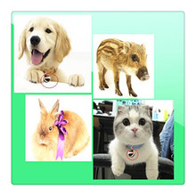 micro gps tracker pets made in china factory locate and monitor vehicles by SMS or Web XY007