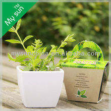 hot seller garden items,bucket planting set ,cheap flower planter