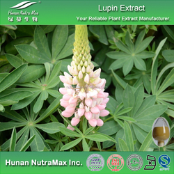 Top Quality Lupin Extract,Lupin Extract Powder,Lupin Seed Extract 4:1 5:1 10:1 20:1