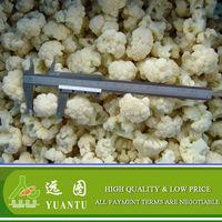 Good Quality Frozen Cauliflower From China Frozen Vegetables Supplier