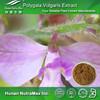 Polygala Vulgaris Extract, Polygala Vulgaris Extract Powder, Natural Polygala Vulgaris Extract