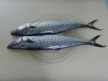 Frozen spanish mackerel for sale steak