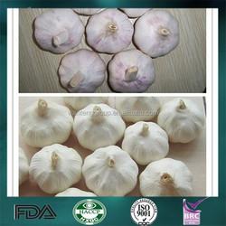 2015 Wholesale Fresh Garlic on Sale