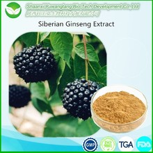 Natural 0.8% Eleutheroside Siberian Ginseng Extract