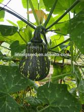Alto Quanlity semillas de china semillas de calabaza