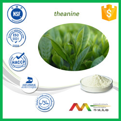 Top quality 98% bio green tea extract with free samples & highest quality & competitive price /green tea extract