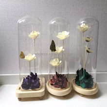 butterfly speciman in glass dome with wooden base