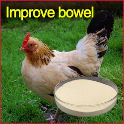 High quality poultry feed for sale , use for Broilers , laying hens, ducks, geese, pigeons , poultry feed