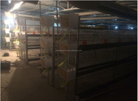 factory price chicken broiler cage H type broiler cage day old chicks