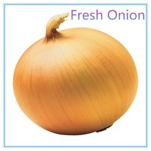 Fresh Red Onion supplier from China