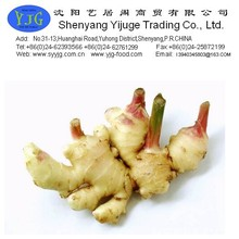2014 chinese fresh ginger with GAP Certificate