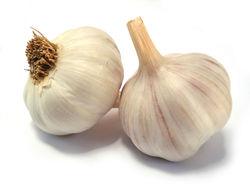 Fresh garlic by Croatia