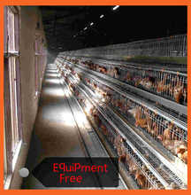 Meter Cage Layer Hen Coop Cage For Sale