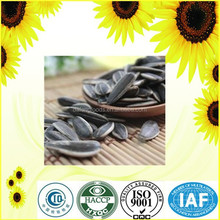 Chinese sunflower seeds 5009 with cheap price