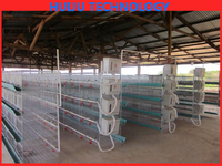 cheap price H type high quality chicken cage/chicken breeding cage/cages for growing broilers