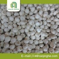 Garlic price of factory/farm in china