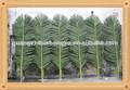 China shengjie artificiales plantas de jardín/hojas de palmera artificial