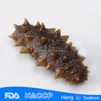 HL011 Health nutrition frozen sea cucumber price for sale for export