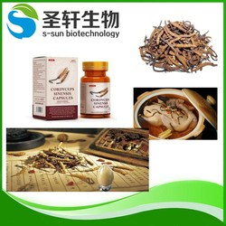Herbal Extract , dyceps extract/ Ophiocordyceps sinensis extract