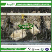 Quality OEM Animal Cages wire mesh quail cage