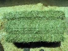 Top Quality Alfalfa Hay Bales