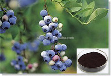 100% organic fruit the new arrival factory supply natural bilberry extract