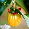 Pure Garcinia Cambogia Extrac t(HCA 50%~98%)