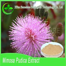 GMP Approved 100% natural organic Sensitive Plant powder wholesale