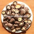 alta qualidade de cogumelos