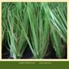 High Density artificial turf soccer grass