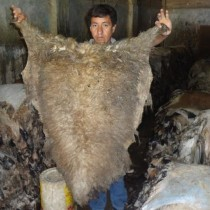 Donkey Hides, Calf Skins, Buffalo Hides, Cow Head Skins, Cow Trimmings, Wet Blue Hides, Sheep Skins,