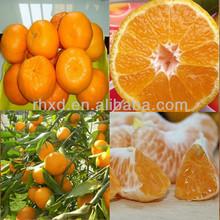 2015 Chinese high quality mandarin orange with lowest price