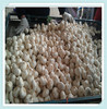 10kg / carton Chinese Pure white Fresh Garlic