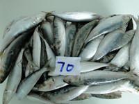 canned fish frozen sardine fish